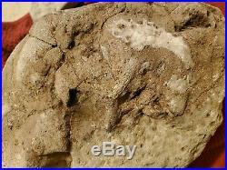 RARE Michigan Fossil Very Large Unique Lake Huron Petoskey Stone